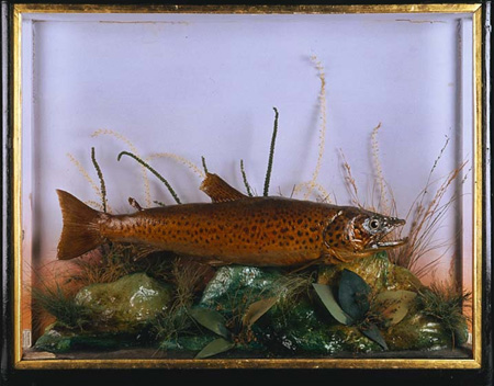 hutchbrowntrout[1].JPG